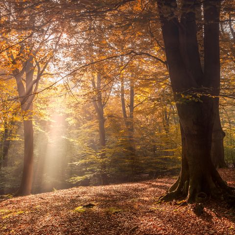 autumn woods 004
