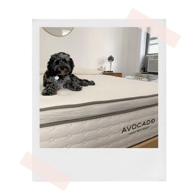 dog sitting on avocado mattress