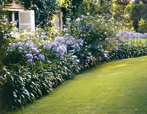 jardín con flores en color azul celeste