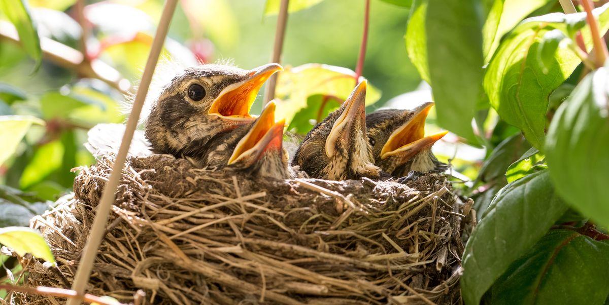7 Ways To Adapt Your Garden For Nesting Birds Season