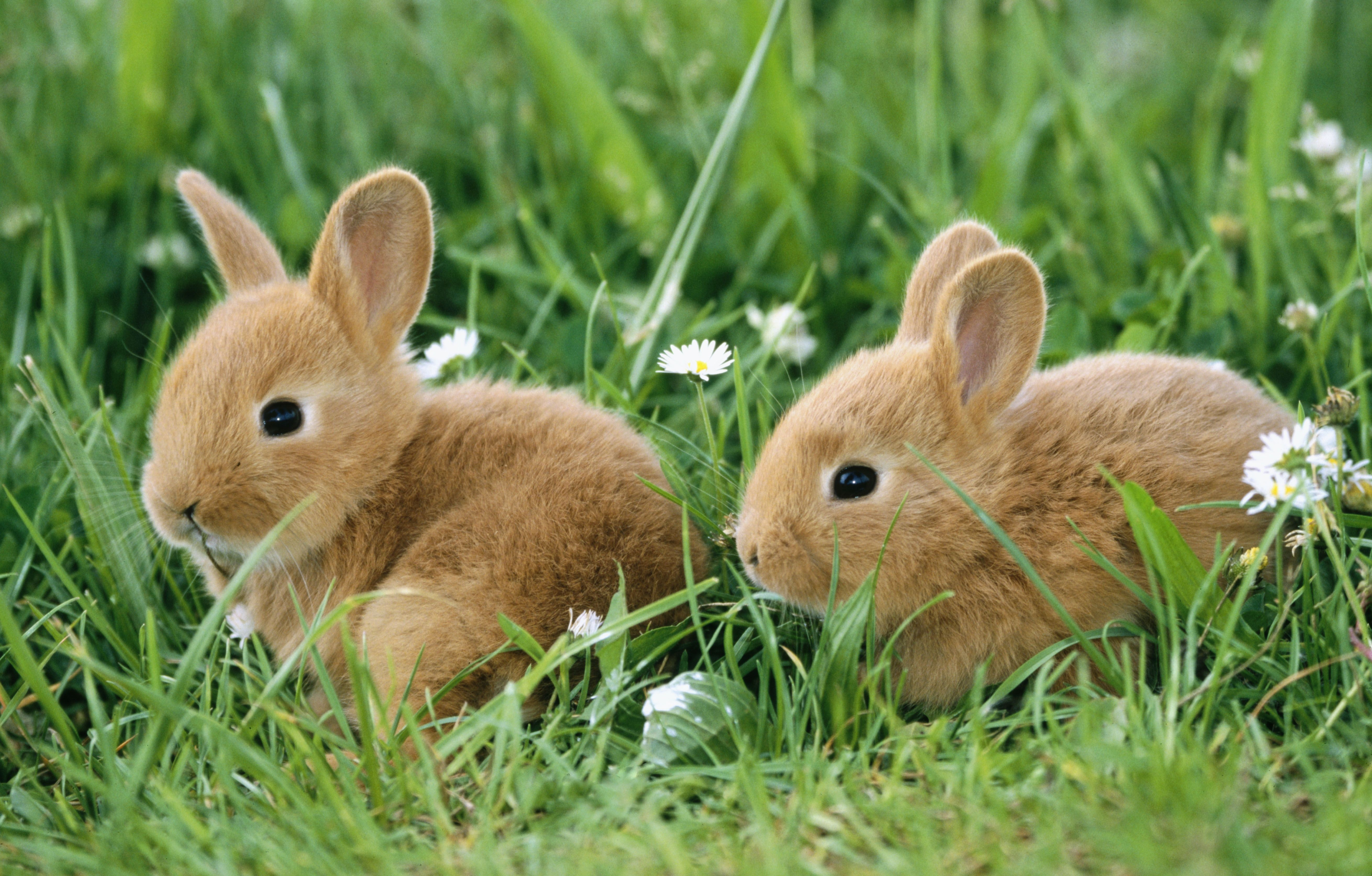 Image result for Bunnies