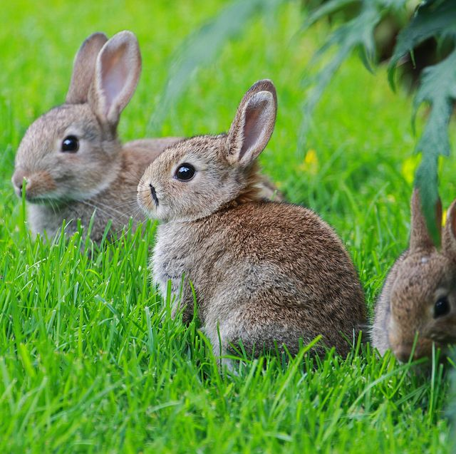 group of baby rabbits in a field