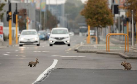 Animals take over deserted cities during coronavirus lockdown