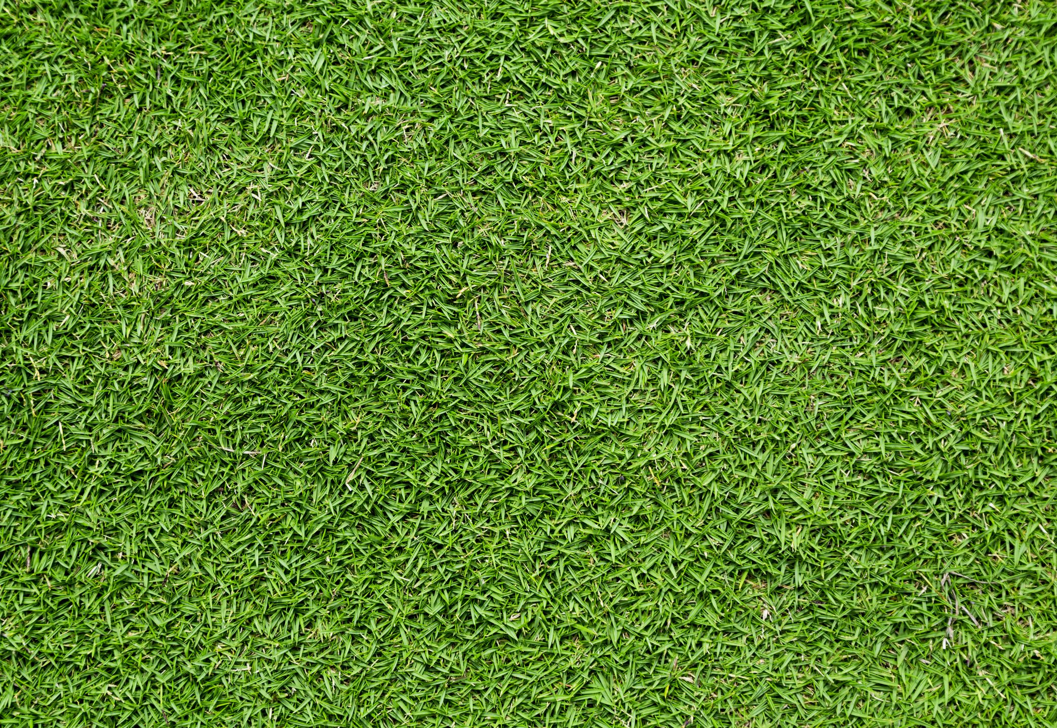 The Most Popular Types Of Lawn Grass What Type Of Grass To Grow