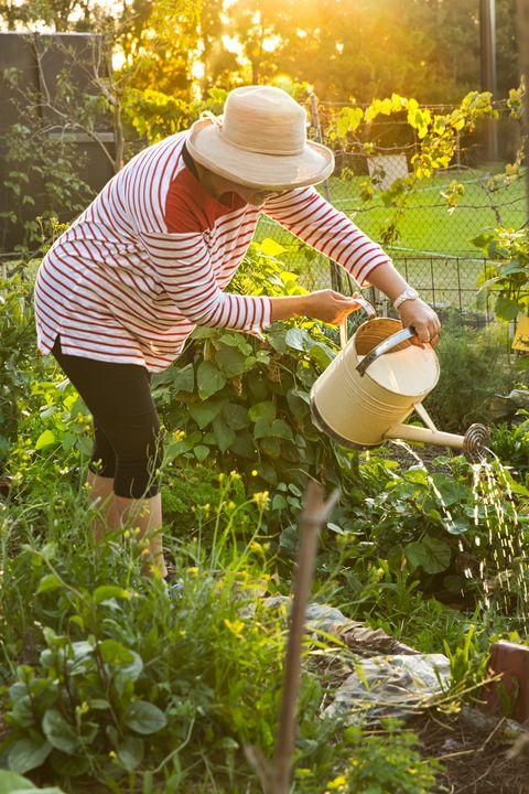 backlit model watering vegetable beds in community garden