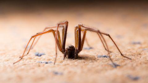 alles over het leven van huisspinnen