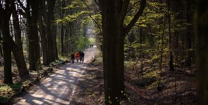 Backroads-Ode-voorjaarsklassiekers-fietsen-wielrennen-toertocht-gravel