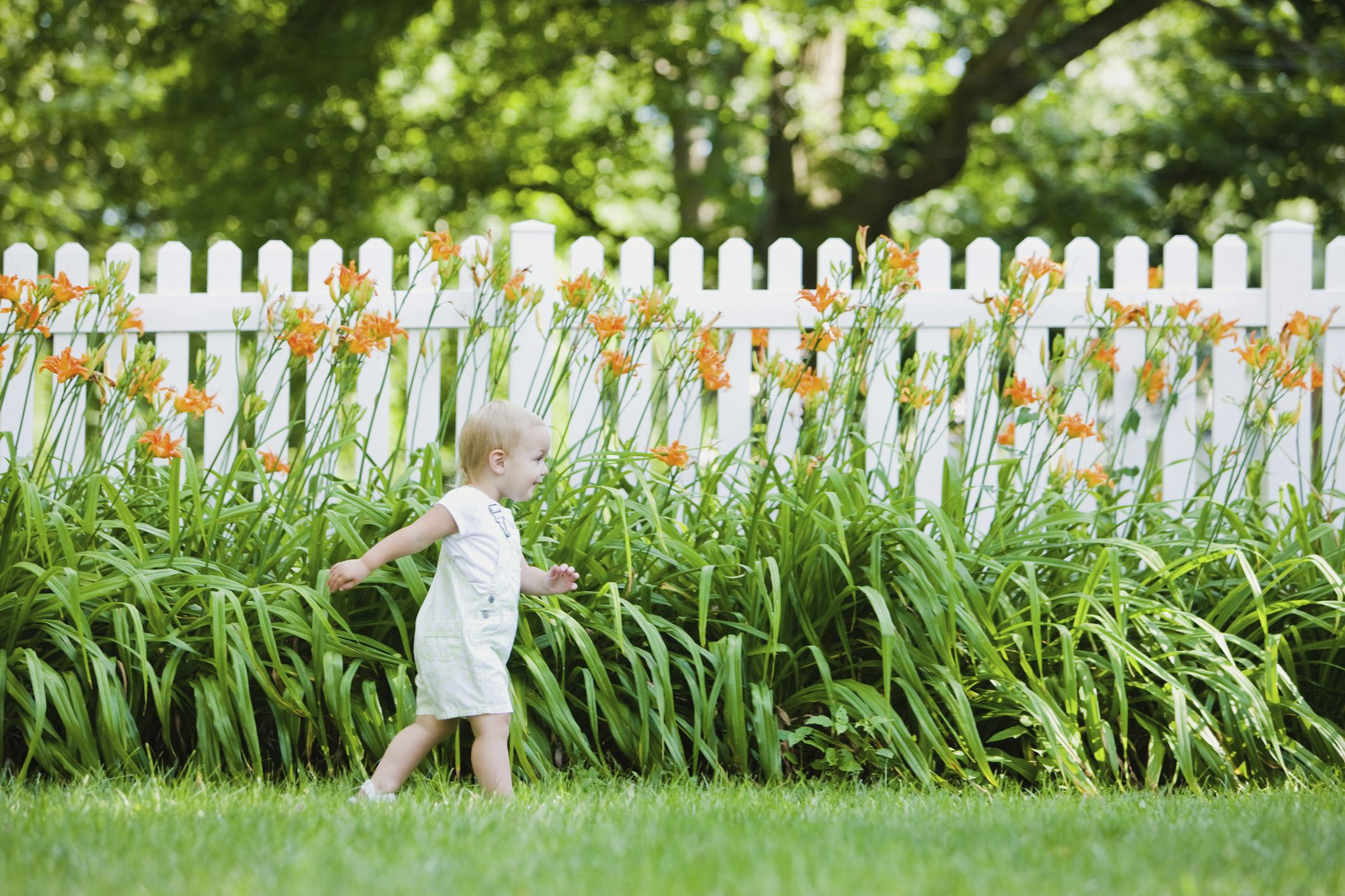 Picture of: 11 Backyard Fence Ideas Garden Fence Options For Privacy