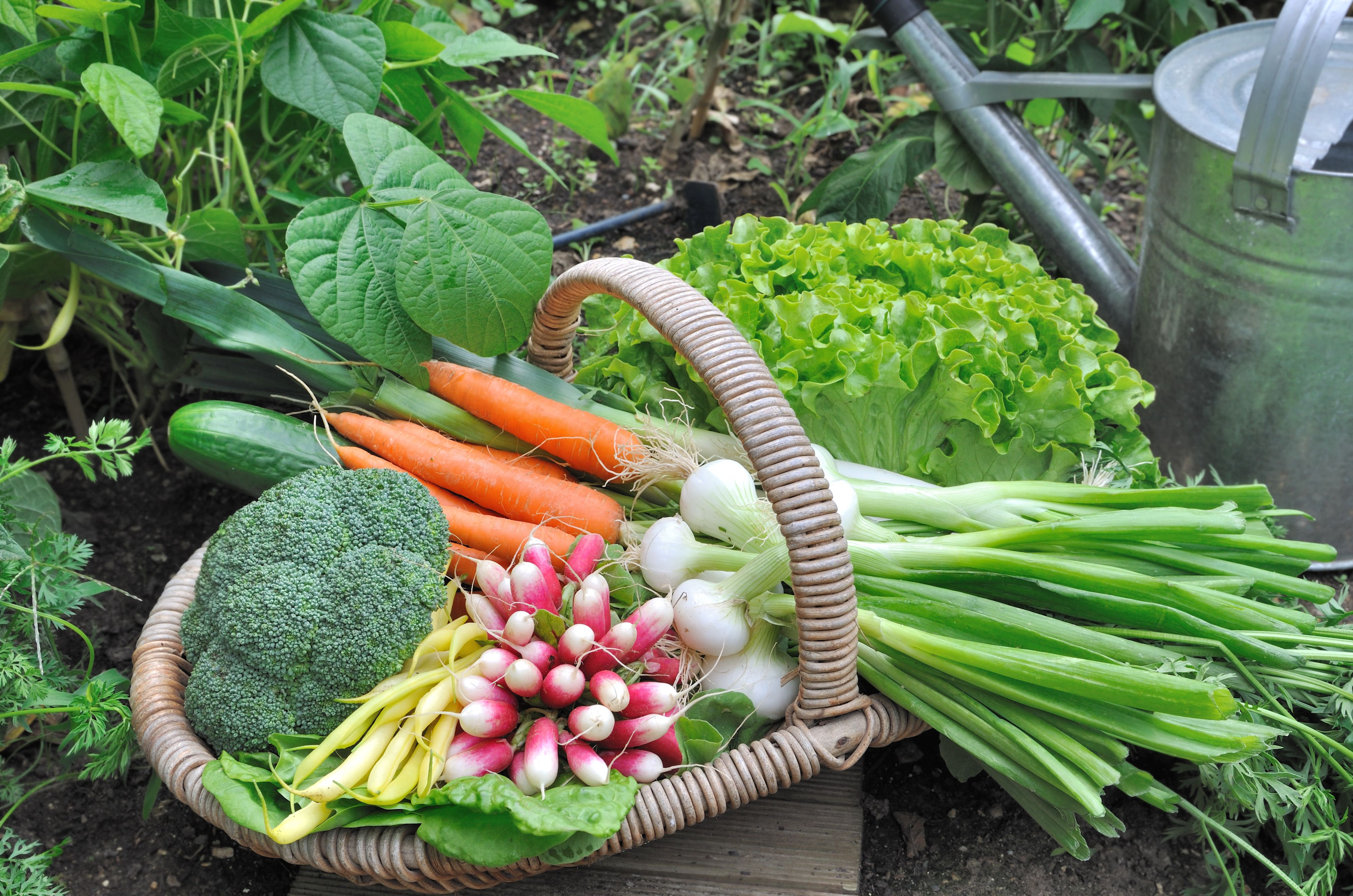 Produce From Vegetable Garden