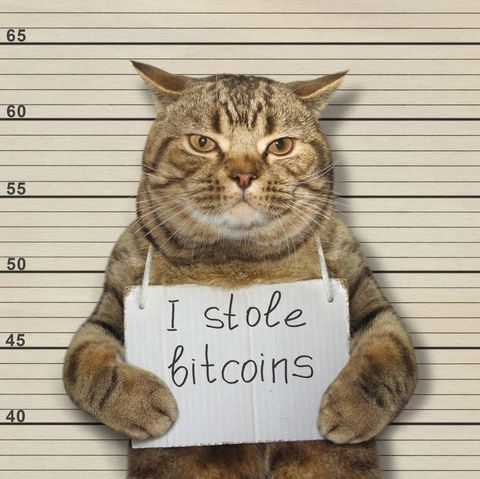Bad cat stole bitcoins