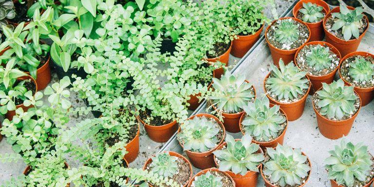 Deze 9 planten overleven in de badkamer