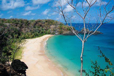 Body of water, Coast, Beach, Blue, Sea, Vegetation, Sky, Natural landscape, Shore, Tree,