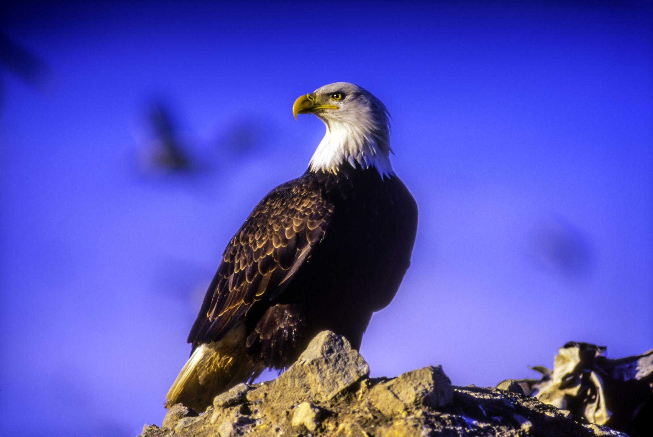 8 Amazing Species That Were Saved by the Endangered Species Act