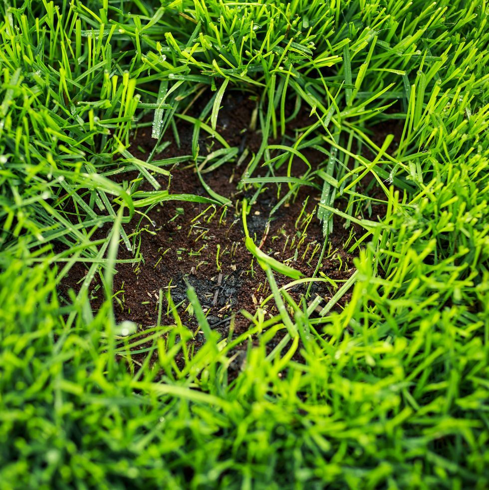 Gardeners should embrace bald patches in their lawns, says RHS