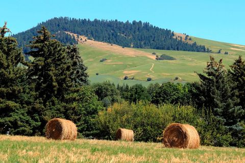 baled hay in a field in the palouse hills of northern idaho
