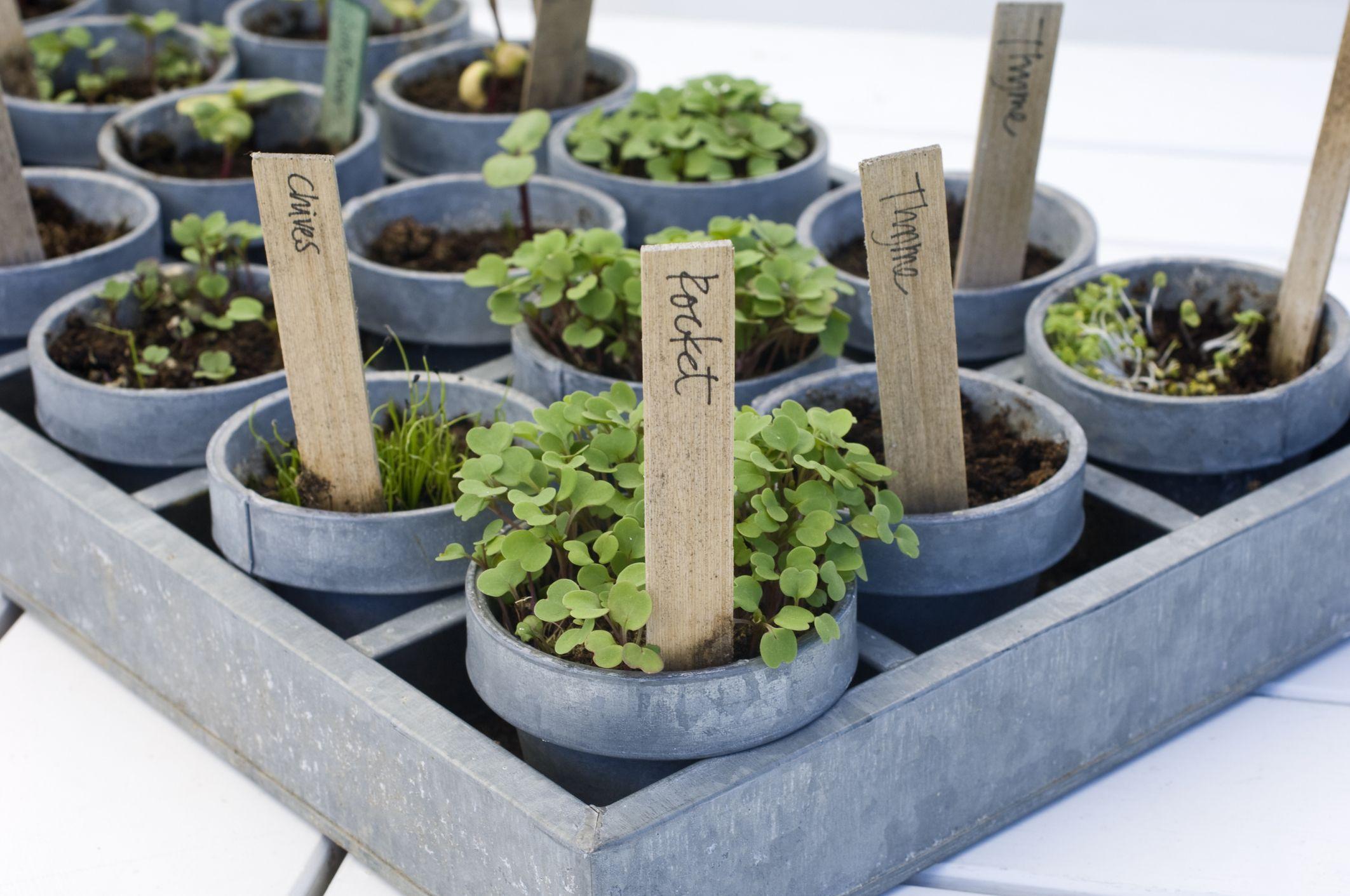 balkonplanten, klein balkon, tuin, tips, lavendel, ijsbloemen, kruiden