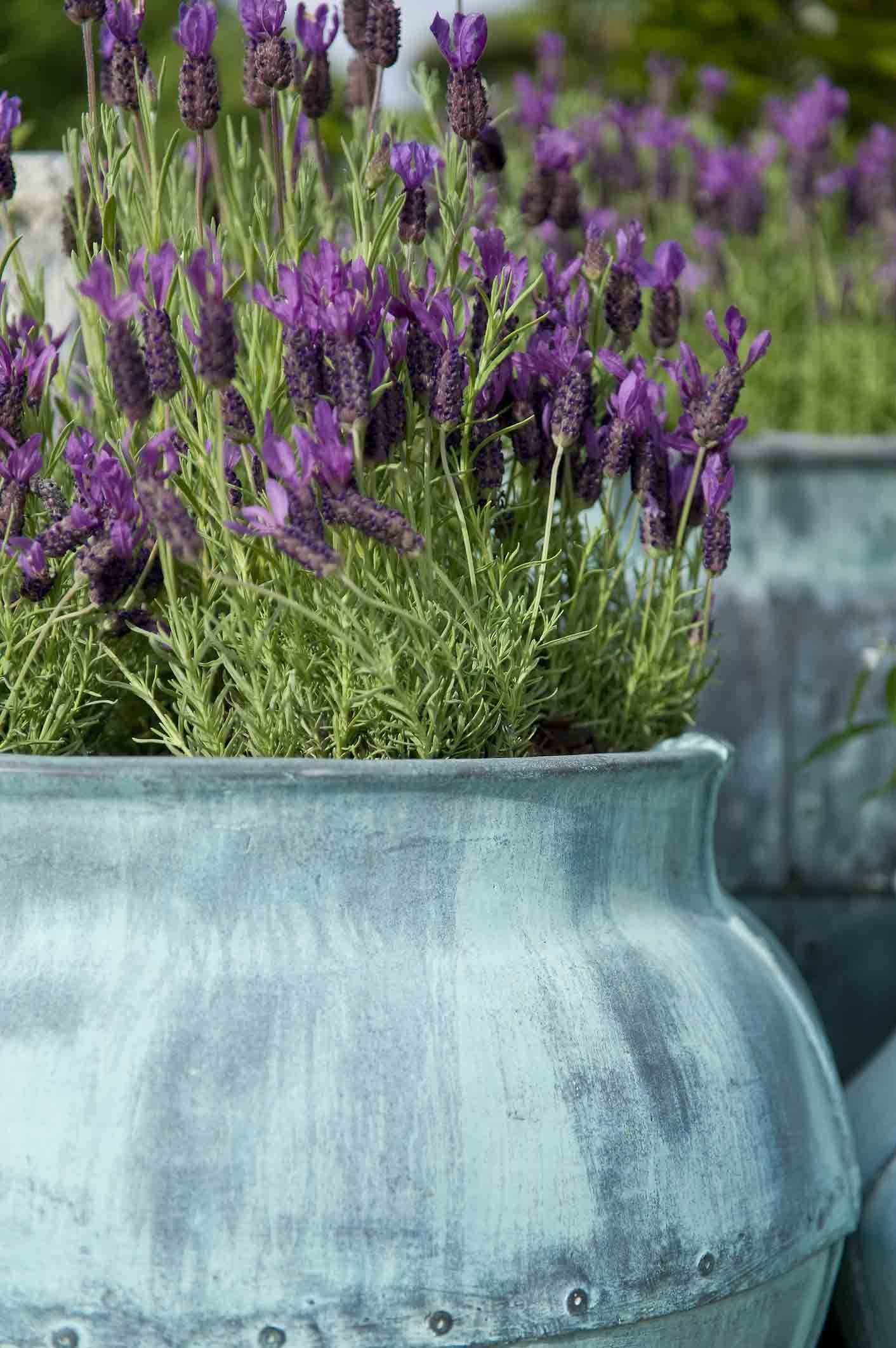 balkonplanten, klein balkon, tips, tuin, lavendel