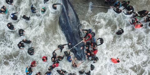 ballena varada mar de plata argentina