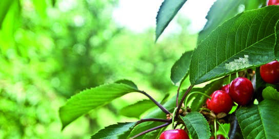 Proyecto Basaldea, emprendimiento agrario