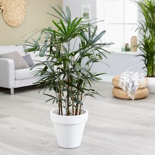 10 Best Air Purifying Plants For The Home