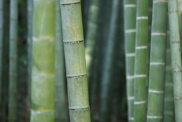 bamboo arredamento
