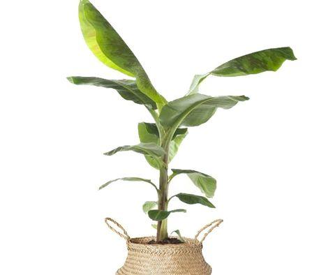 de populairste kamerplanten en hoe je ze het beste kunt verzorgen