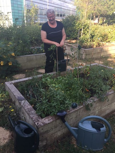 BaxterStorey allotments