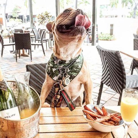 """Bark-N-Brunch"" Events at Brimstone Woodfire Grills at Doral, Florida"