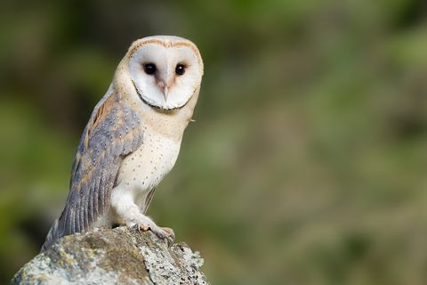 How to Attract Owls to Your Yard - How to Install an Owl Box Snowy Owl House Plans on barn owl house plans, screech owl house plans, horned owl house plans, barred owl house plans,