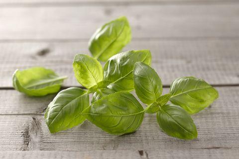 Basil - How to Grow Herbs Indoors