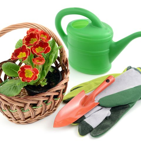 basket with flowerpot of primroses and gardening tools