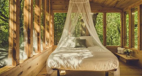 Bedroom, Bed, Furniture, Canopy bed, Room, Property, Bed frame, Interior design, Mosquito net, Tree,