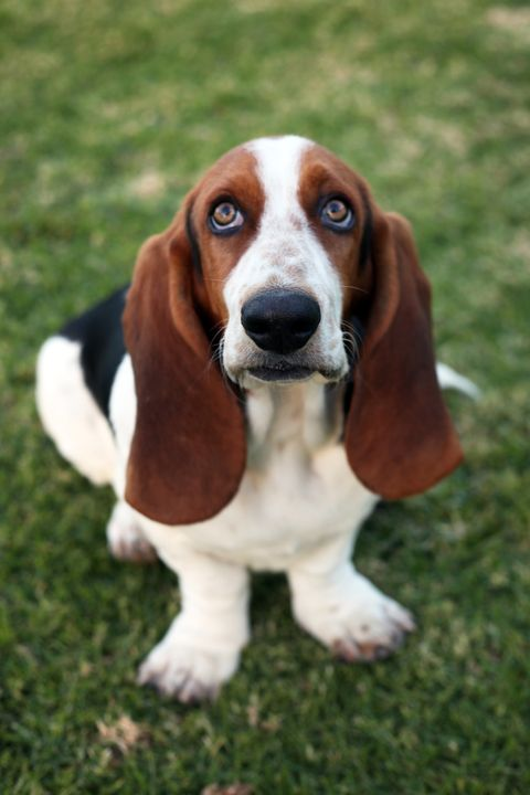20 Best Family Dogs Dog Breeds