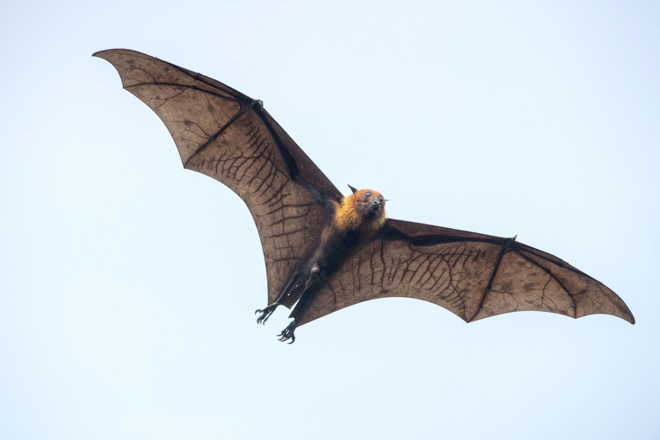 Bats are the only mammals that can fly.