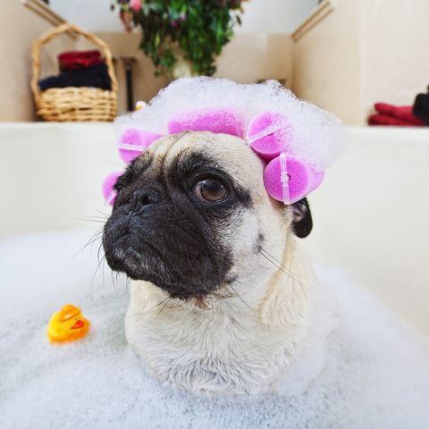 perro en una bañera disfruta de un spa en casa