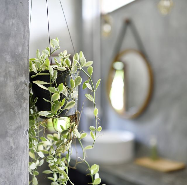 bathroom, hanging plant