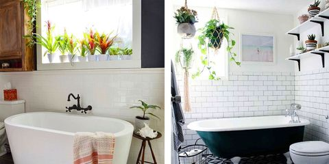Bathroom Plants