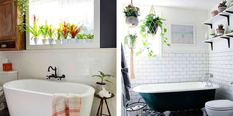 Plants For The Bathroom. Bathroom Plants