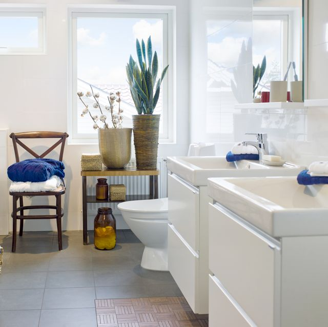 Best Plants For Showers And Bathrooms