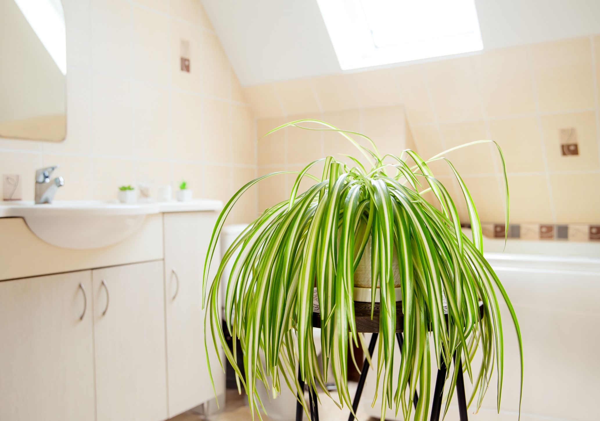 Bathroom Plants – 20 Best Plants For Your Bathroom