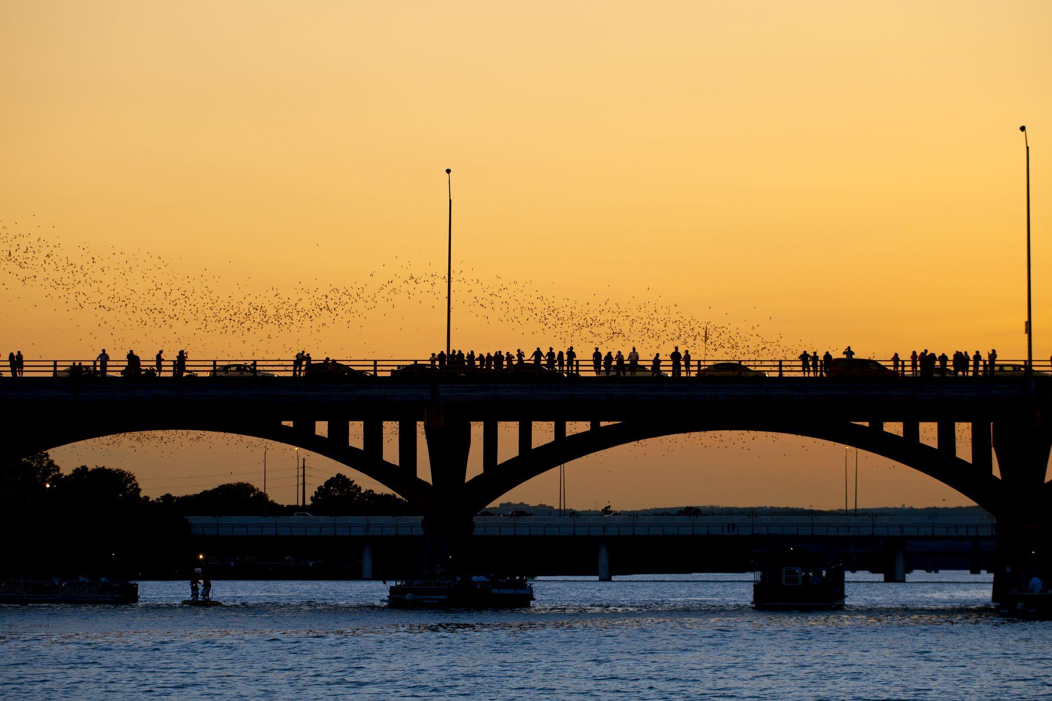 Some bats go fishing.