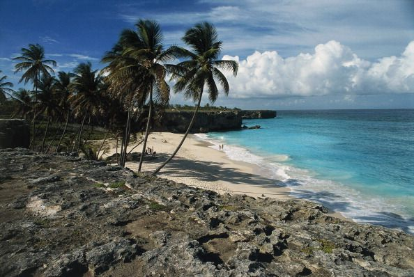 beach with palm trees and rocky outcrops