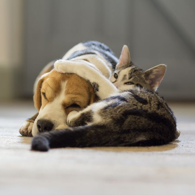 dogs and cats may need their own covid 19 vaccine, says new study