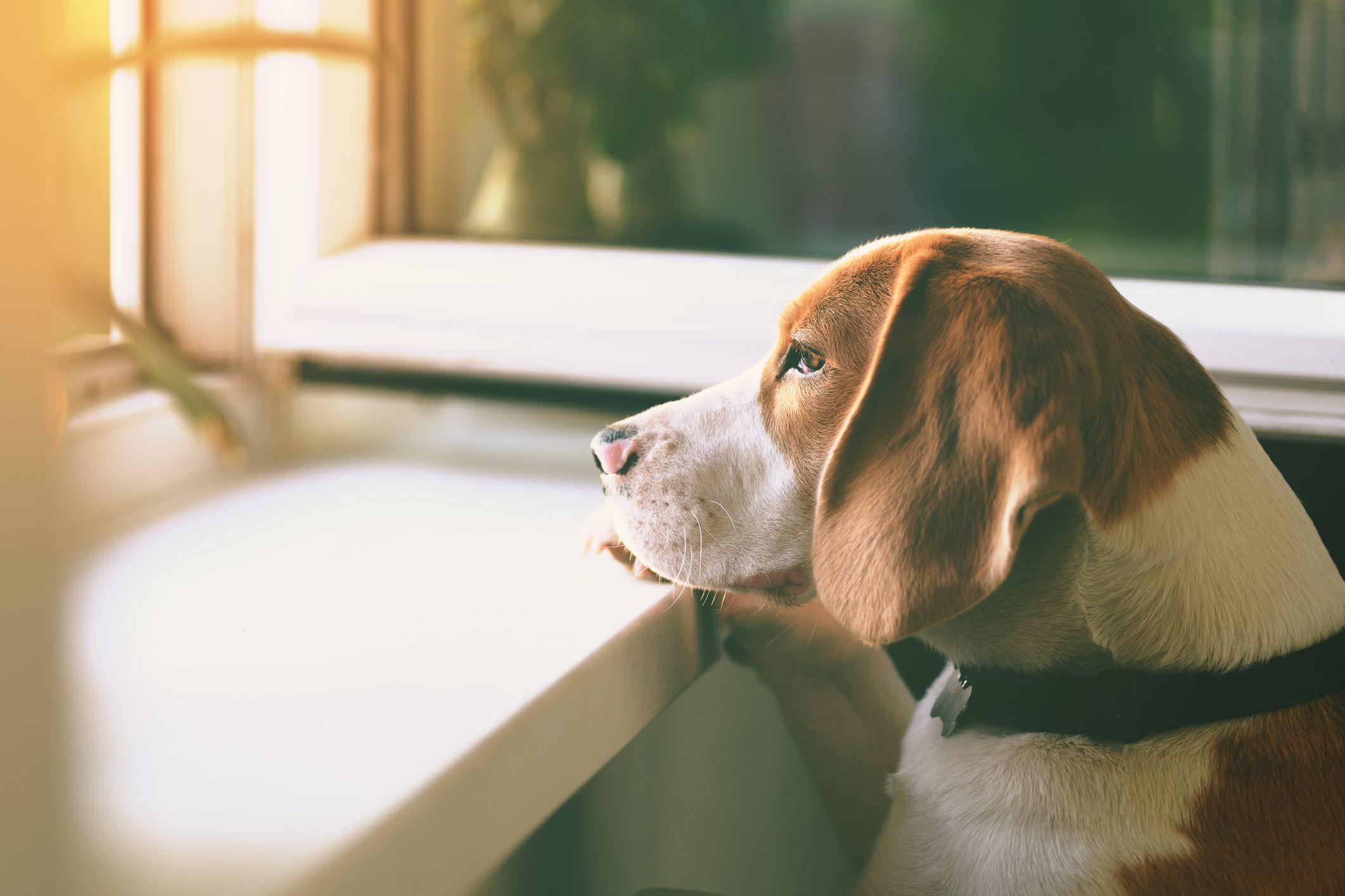 5 behaviours that indicate your dog is lonely