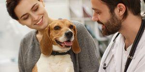 werken placebo's bij dieren