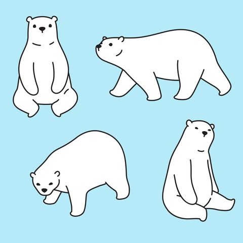 Bear vector polar bear icon logo cartoon character illustration symbol design