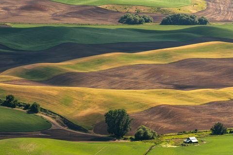 beautiful farmland patterns seen from steptoe butte, washington