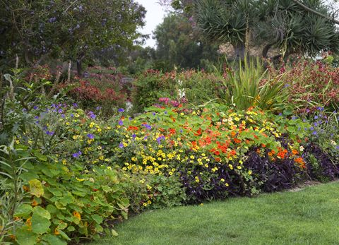 Beautiful Flower Garden Bed