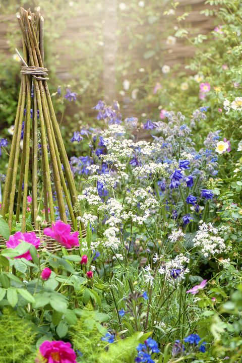 May Gardening Jobs - Gardening To Do List For May
