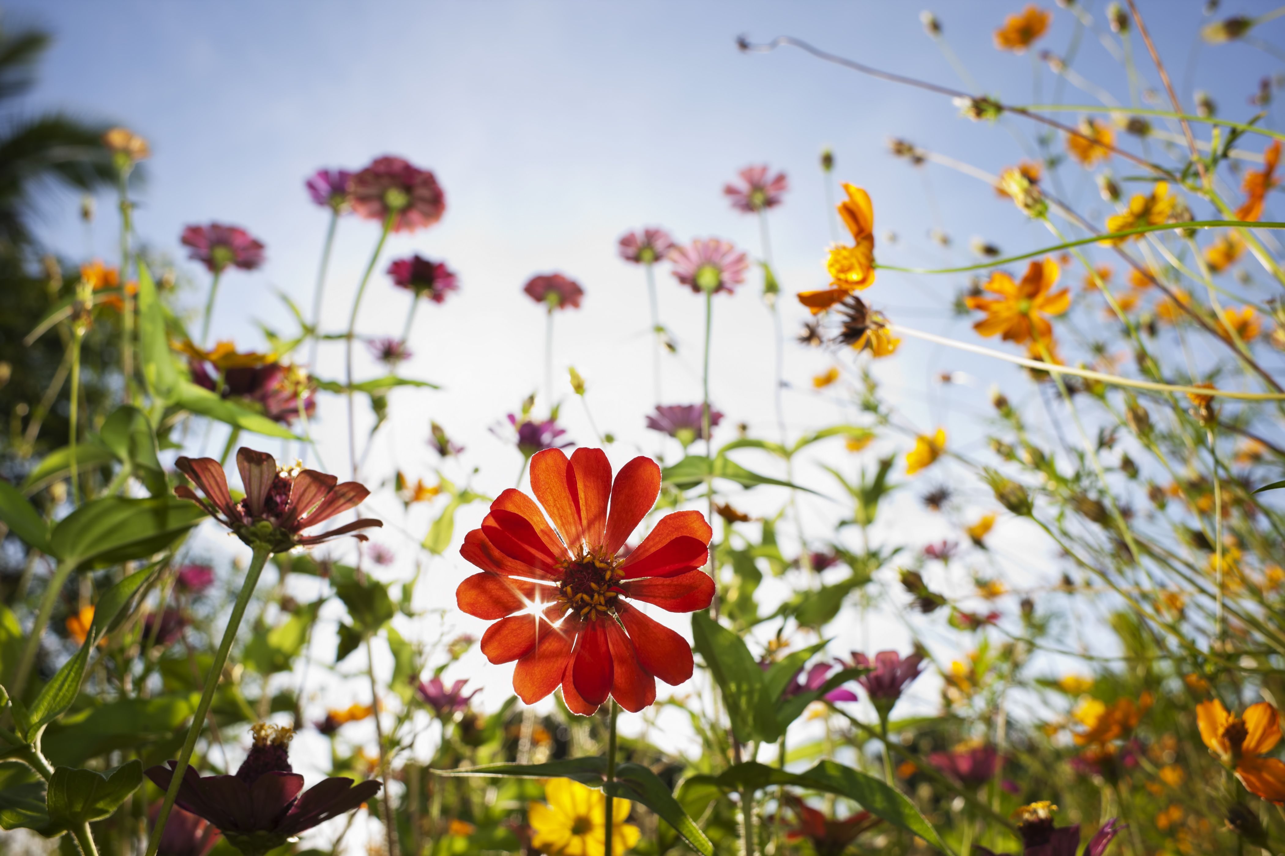 Gardening in May: This is absolutely everything you need to do